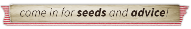 Vegetable Seeds in Stock!