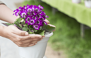 Add Color Quickly with Annuals