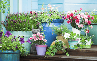 Add Containers to Your Patio or Porch