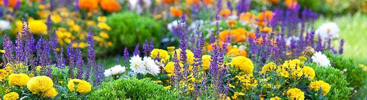 Top 10 easy care perennials zionsville in altum s for Easy care perennial plants