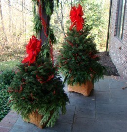 Christmas trees zionsville in altums to your door solutioingenieria Image collections