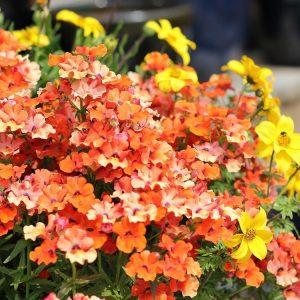 altums-four-seasons-of-color