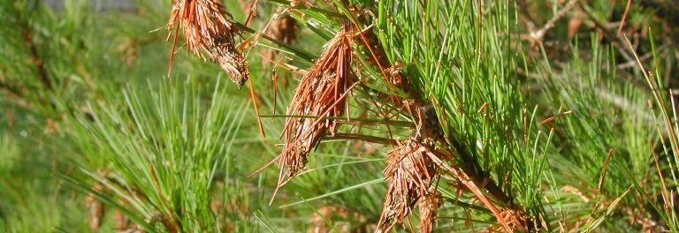 How To Control Bagworms | Altum's | Zionsville, IN