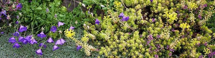 When to Plant: Drought-tolerant Plants | Altum's