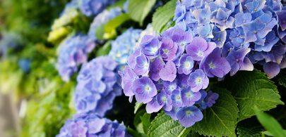 Monthly Gardening Tips